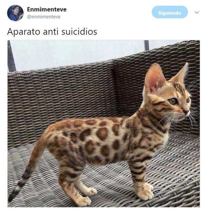 gato con manchas de jaguar