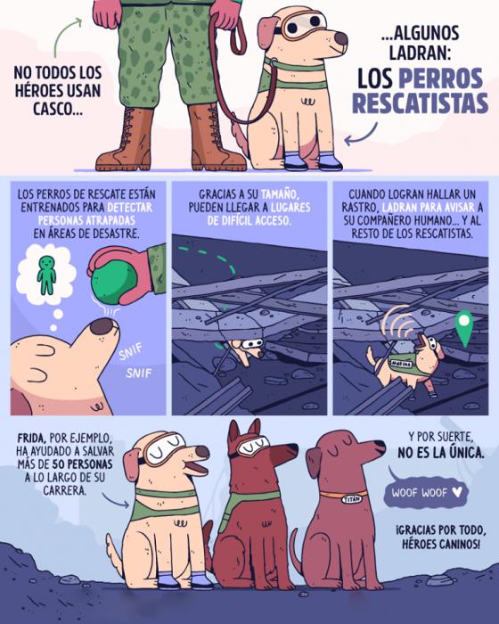 perritos rescatistas