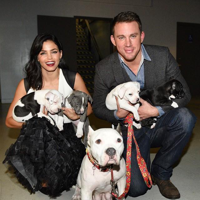 channing tatum y sus perros
