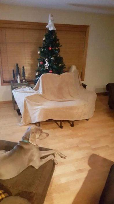 arbol de navidad con valla de sillas