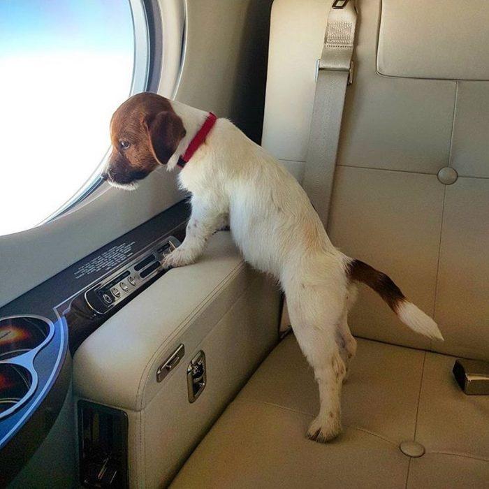 Cachorro mirando por la ventana