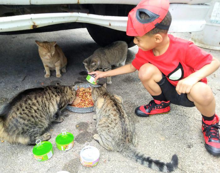 niño alimentando gatos