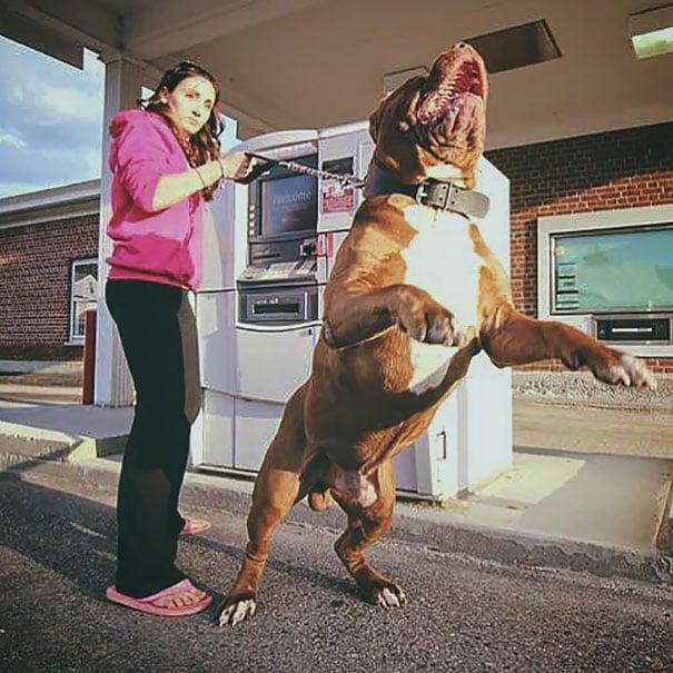 Perro como guardia de seguridad