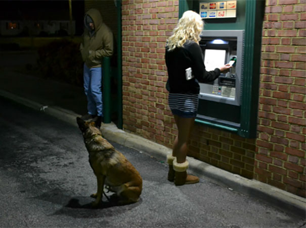 Perros como guardias de seguridad en un cajero automático