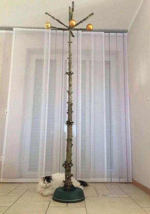 tronco de arbol de navidad seco