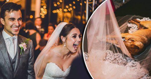 Un perrito decidió dormir en el velo de una novia: una hermosa historia con final feliz