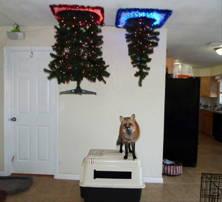 abrol de navidad cortado en el techo