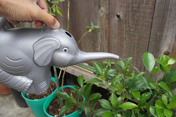 elefante regadera plastica reddish