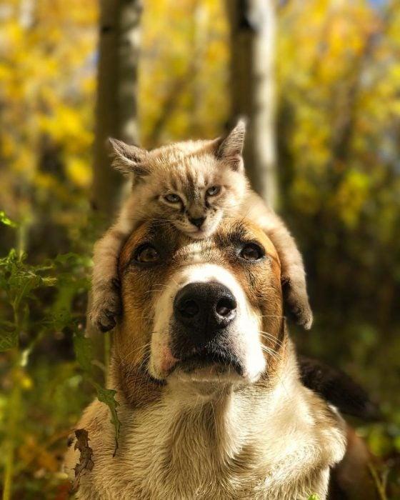 gato y perro amigos por el mundo