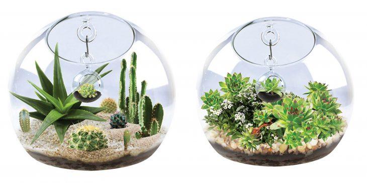 terrarios de cristal