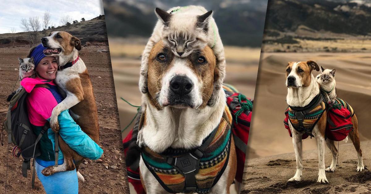 Este adorable dúo Gato y Perro van en épicas aventuras por el mundo