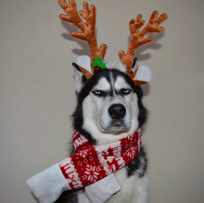 Anuko tarjeta navideña