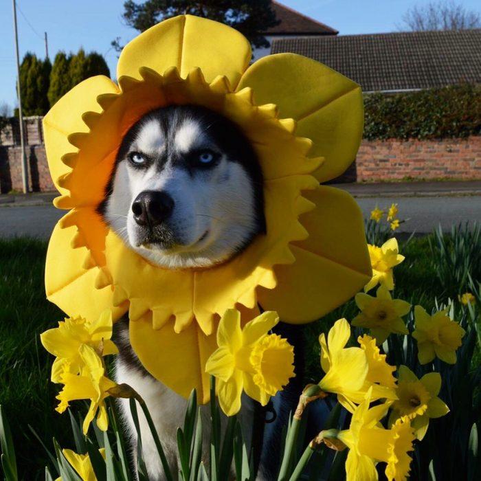 anuko de primavera