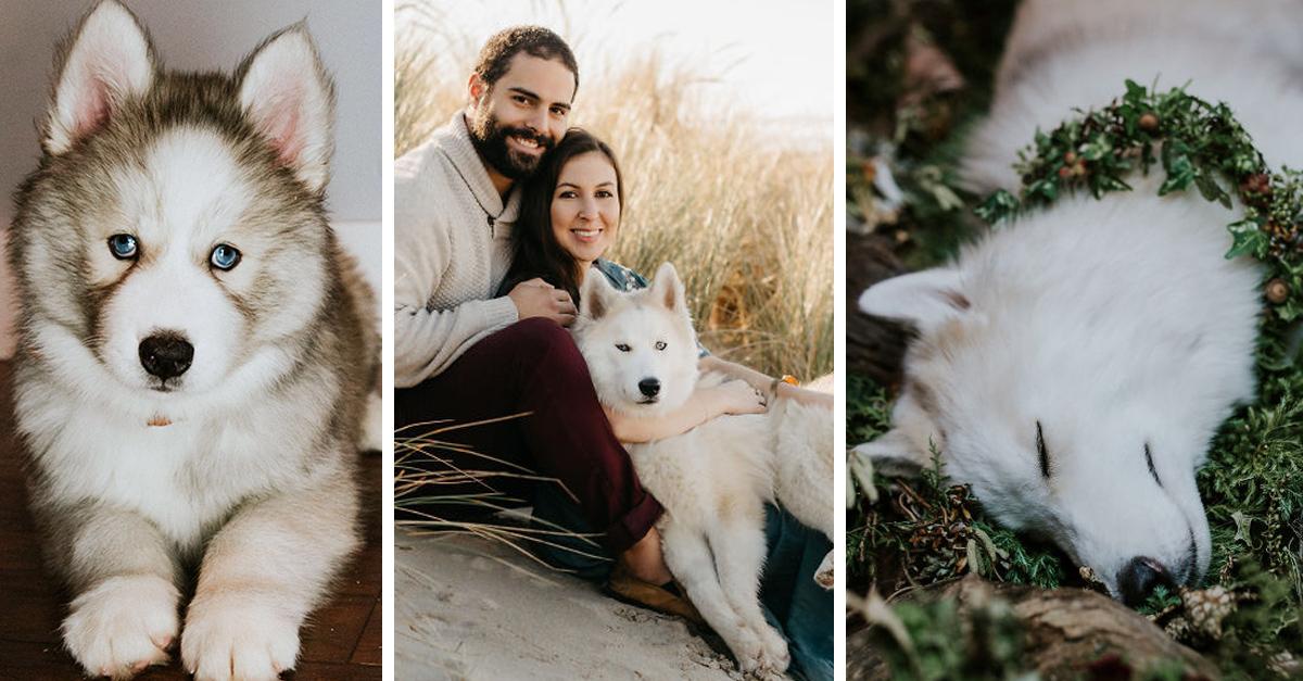 La desgarradora carta de una mujer que perdió a su adorado perro de una forma trágica