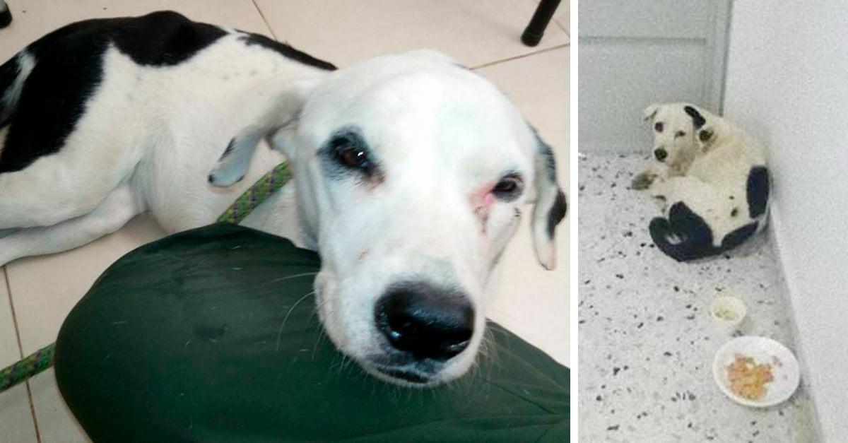 Nube Viajera, la perrita que murió de tristeza tras ser abandonada en un aeropuerto
