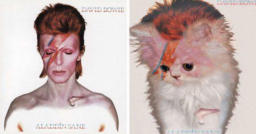 Este chico ha recreado las portadas de discos famosos con gatos; el resultado es adorable