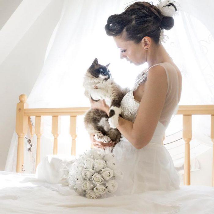 novios y gatos
