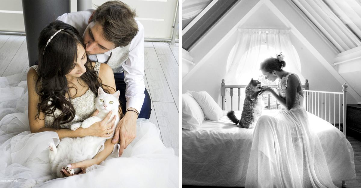 Está fotógrafa hace sesiones de boda con adorables gatos