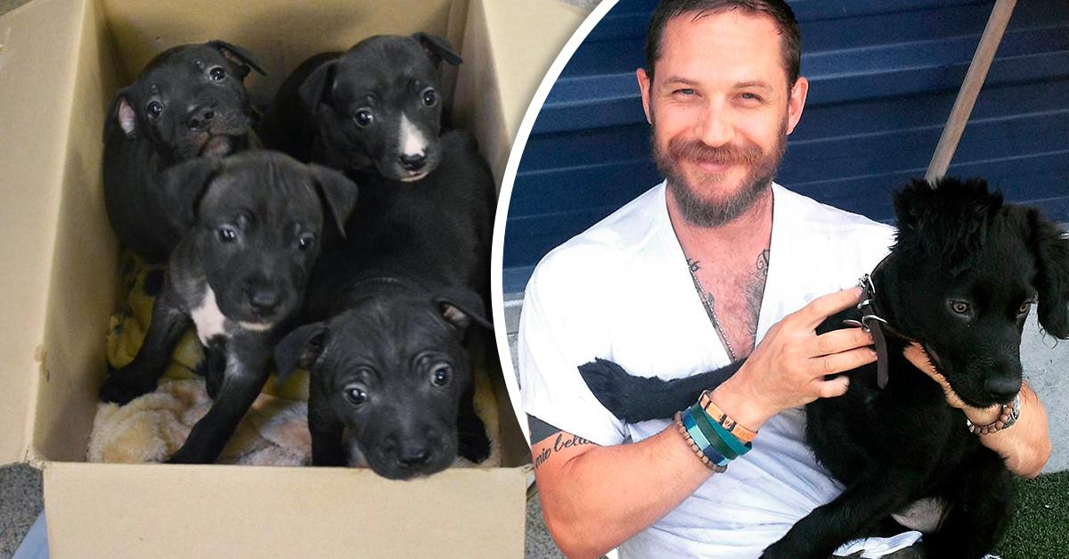 Tom Hardy rescata a unos cachorritos abandonados; es adorable