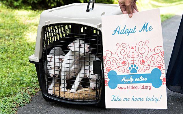 Cachorros dentro de una canastilla de viaje el día de una boda