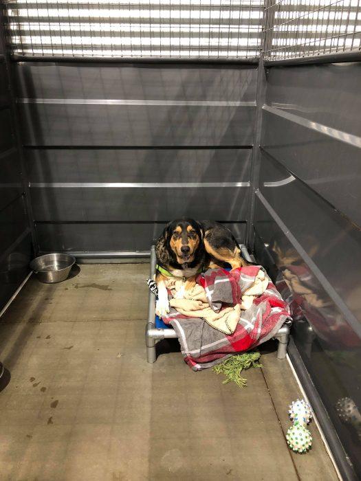 Perro dentro de una jaula en un refugio de animales