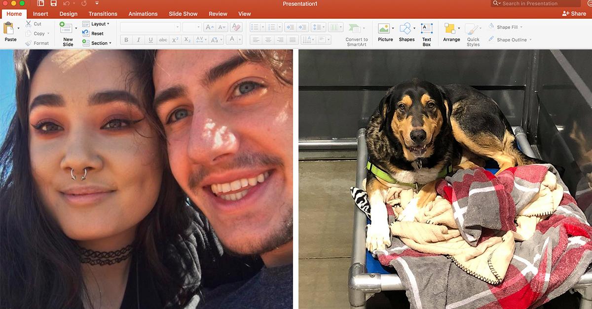 Esta chica usó el poder de PowerPoint para adoptar a un lindo cachorro