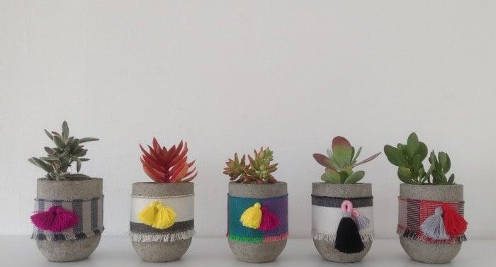 Plantitas suculentas con estambre que las adorna