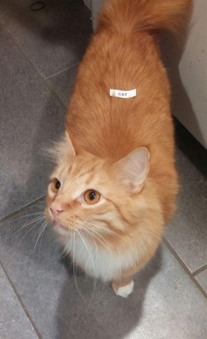 Gato marcado con una etiqueta que dice gato