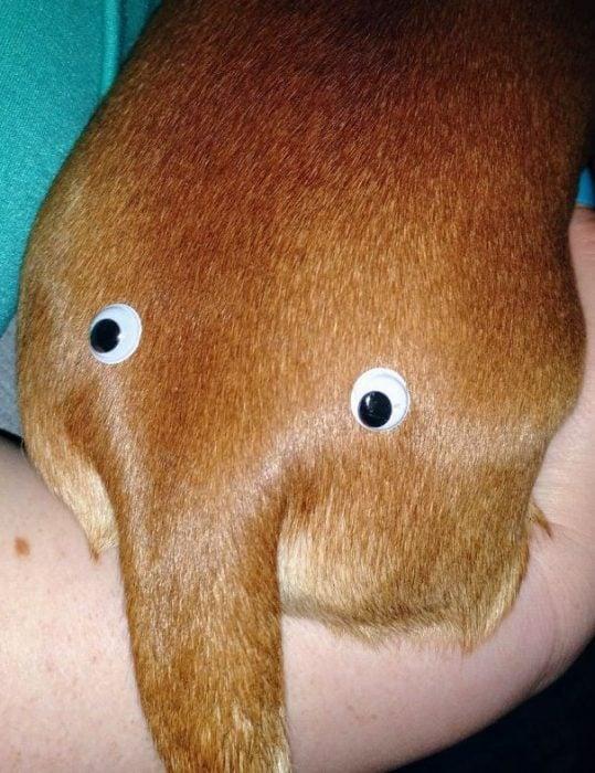 Perro con un par de ojos en el trasero