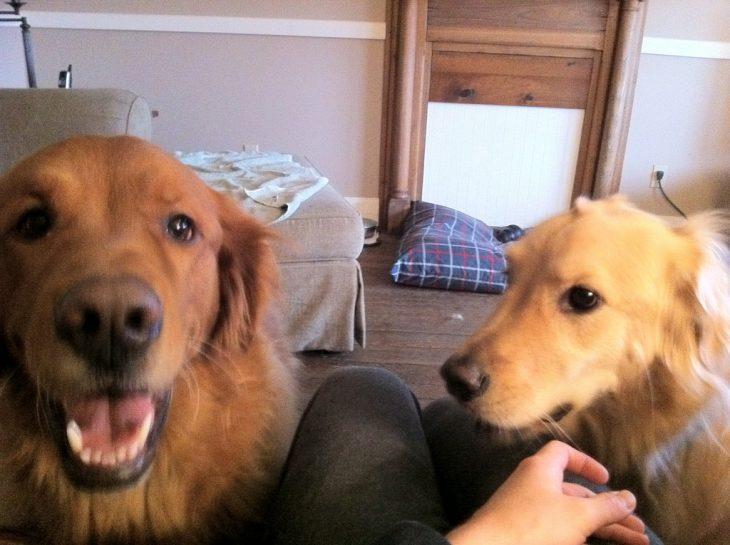 mascotas celosas