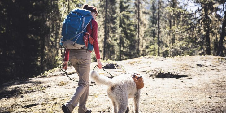 la misión de los perritos