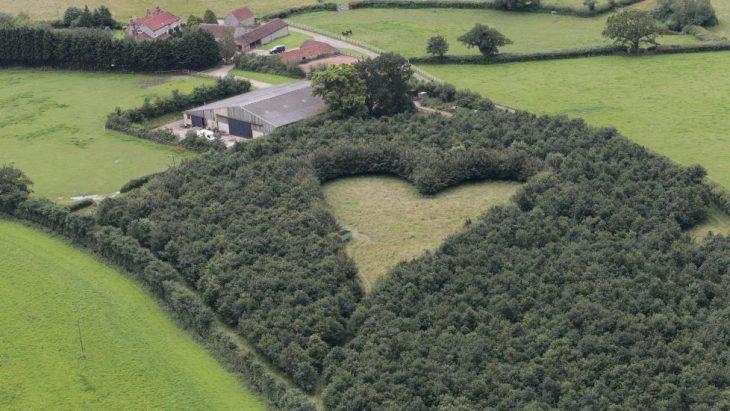 Corazón formado con árboles y con narcisos