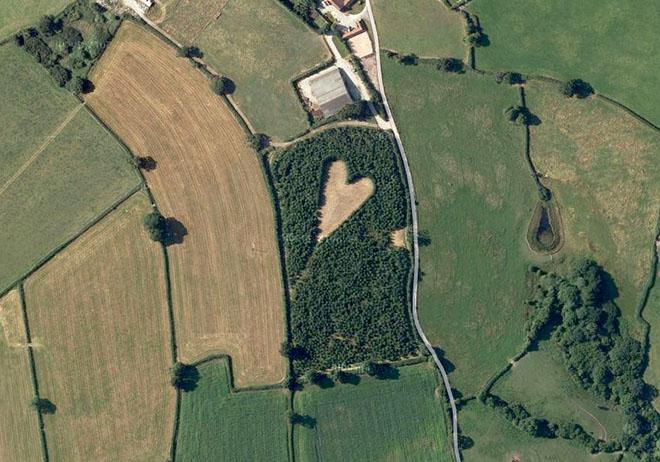 vista aerea de un corazón formado con árboles