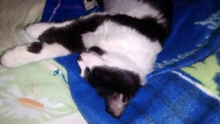 gatito con manchas negras