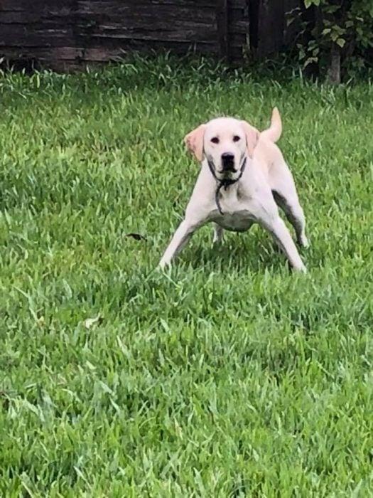 perrito jugando futbol