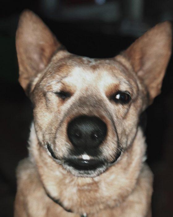 perro cerrando el ojo