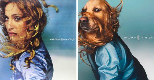 Maxdonna es la versión canina de la reina del pop y quizá la mejor imitadora