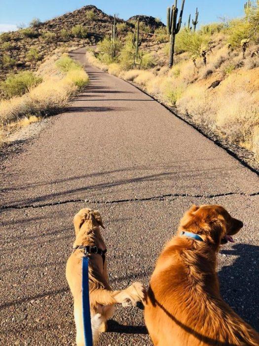 perros con correa