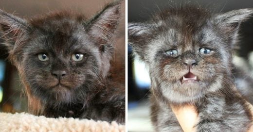"Este gatito con un peculiar rostro ""humano"" ha conquistado a todo Internet"