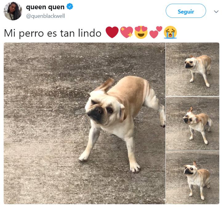 Comentarios en twitter sobre personas que tienen perros