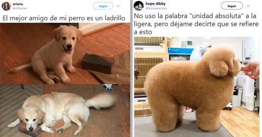 15 de los mejores perros que han pisado Internet