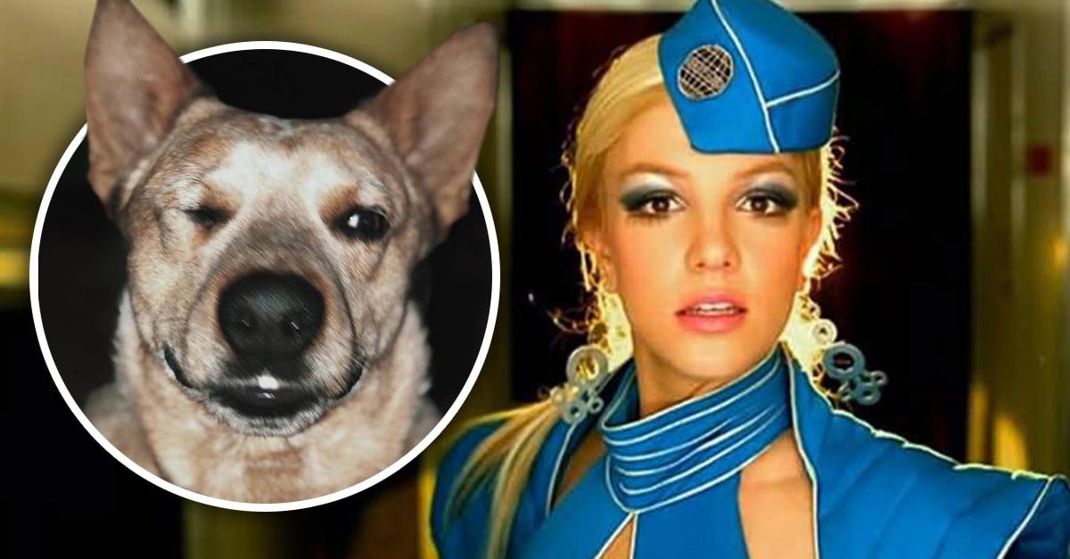 El ladrido de este perro es clavado al inicio de 'Toxic' de Britney Spears #