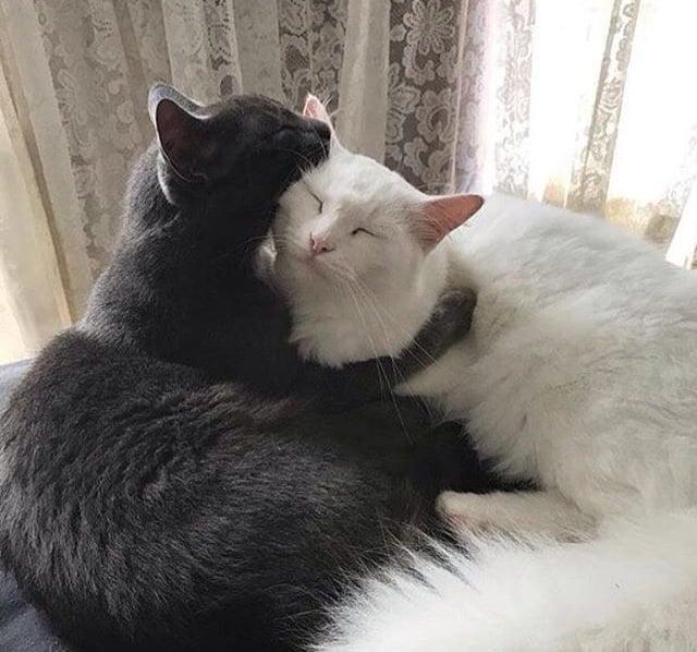 Gato negro y gato blanco son amigos