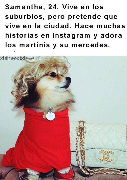 perro con peluca y ropa roja