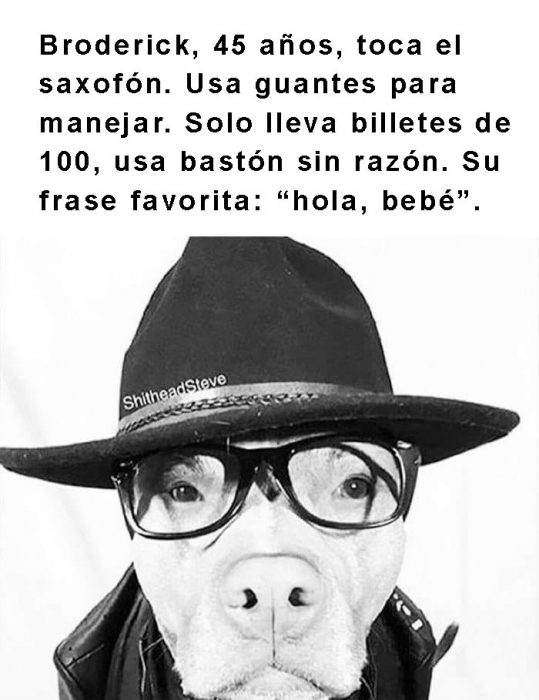 perro con sombrero y lentes