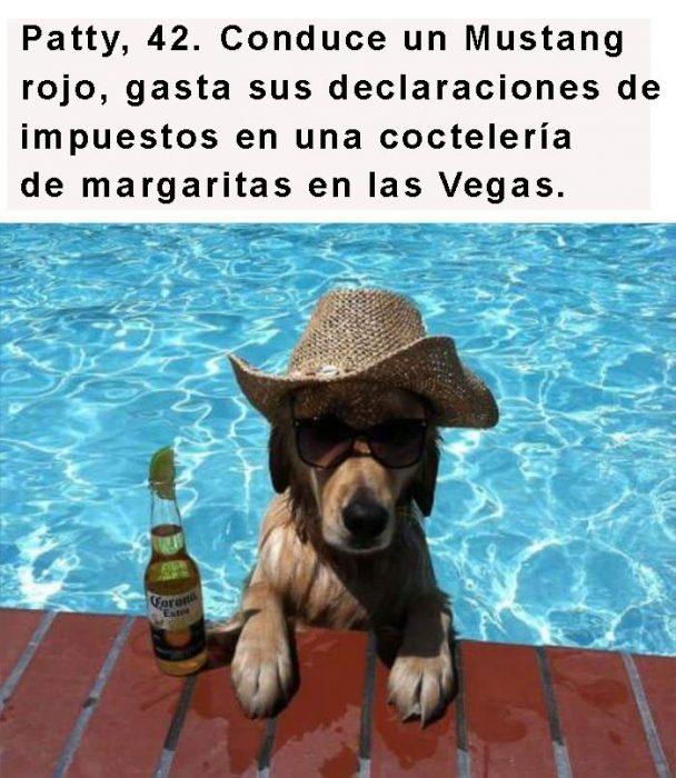 perro con sombrero y cerveza