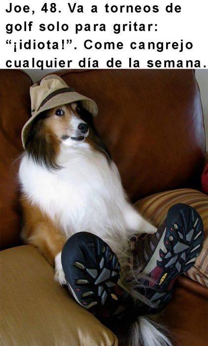 perro con tenis y gorro