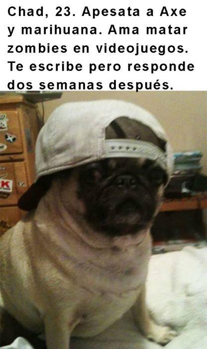 perro pug con gorra y frase arriba