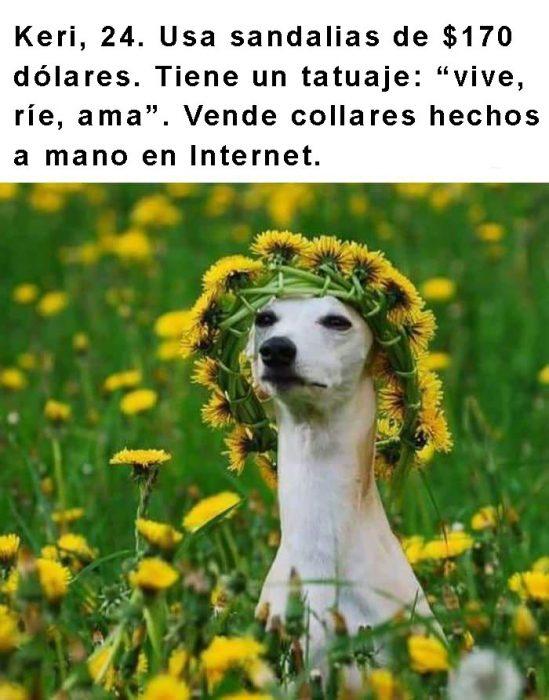 perro con corona de flores y frase arriba