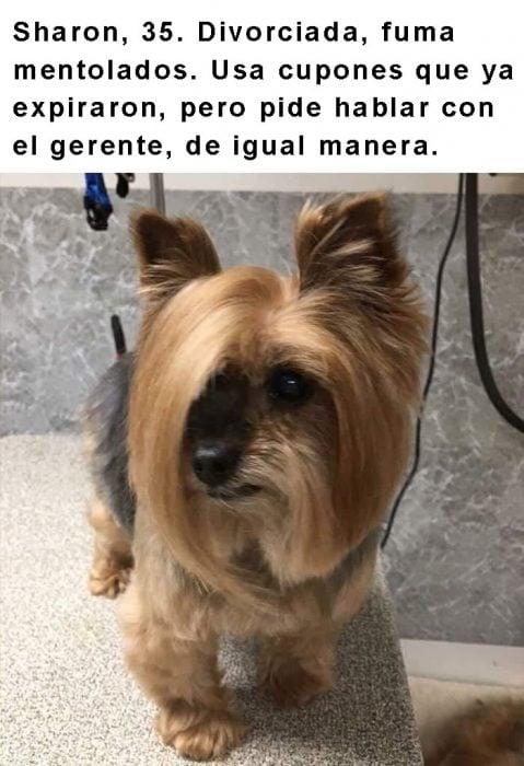 perrito con cabello largo y frase arriba
